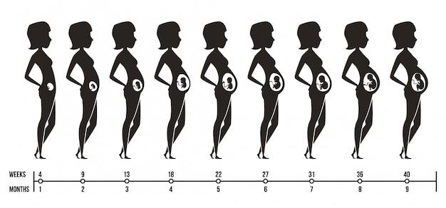 Fasi della gravidanza. siluette della mamma felice con le immagini femminili di infographics dei trimestri di gravidanza del neonato
