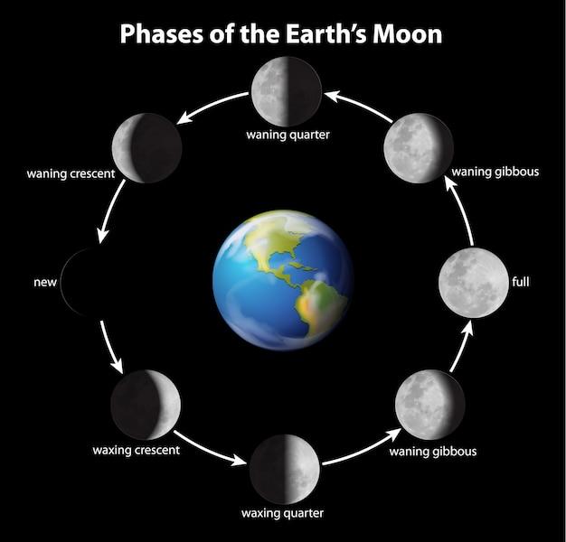 Fasi della luna