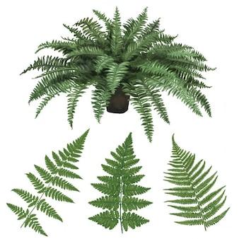 Fern e foglie di felce disegnata a mano illustrazione vettoriale