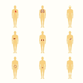 Figure umane con organi interni