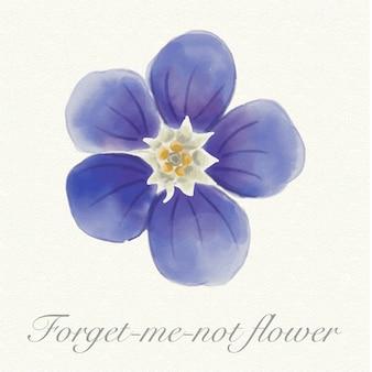 Fiore blu nontiscordardime dell'acquerello isolato
