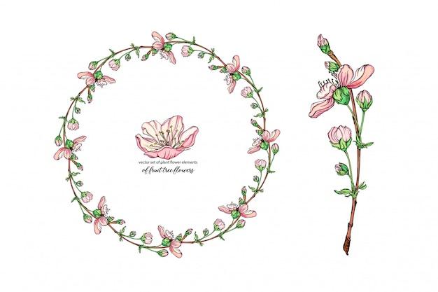 Fiore con delicati fiori, ramo fiorito