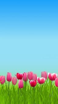 Fiore del tulipano nel fondo del giardino