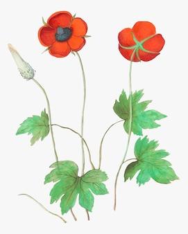 Fiore di anemone in stile vintage