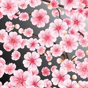 Fiore di ciliegio, ramo di fiori di sakura