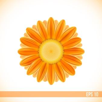 Fiore di gerbera di colore arancione di vettore
