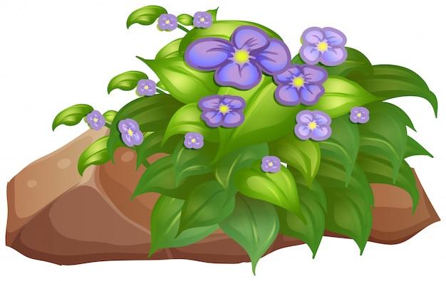 Fiore e roccia viola su bianco