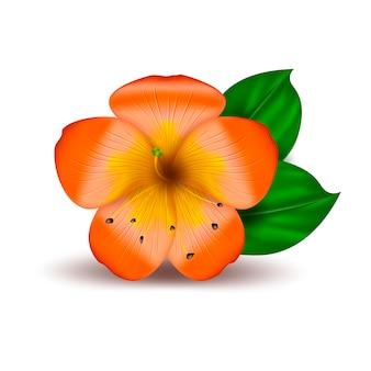 Fiore hawaiano tropicale realistico di vettore
