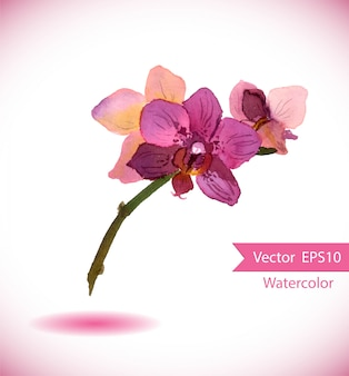 Fiore orchidea acquerello