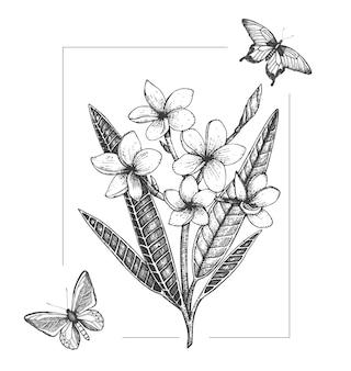 Fiore tropicale con farfalle isolato su sfondo bianco. plumeria disegnata a mano, insetti. disegno grafico bianco e nero floreale. elementi di design tropicale. stile di ombreggiatura delle linee.