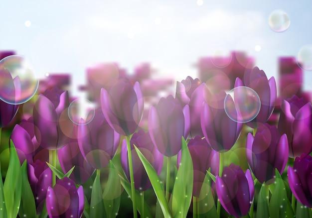 Fiori dei tulipani colorati porpora nel giardino