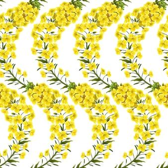 Fiori di colza con motivo, colza. brassica napus.
