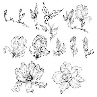 Fiori di contorno in bianco e nero e foglie e boccioli di fiori di magnolia