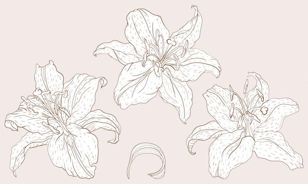 Fiori di giglio orientale
