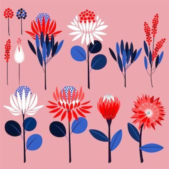 Fiori di protea e piante botaniche. vector simboli ornamentali in vettoriale