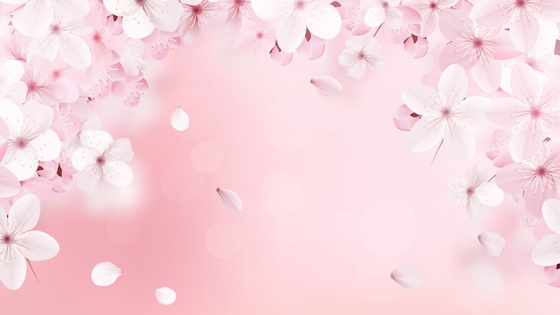 Fiori di sakura rosa chiaro sboccianti