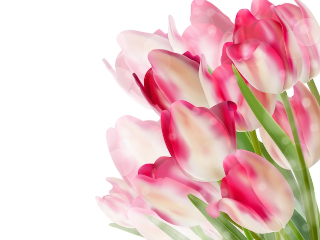 Fiori di tulipano isolati su bianco.