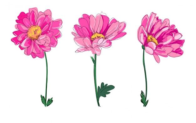 Fiori disegnati a mano, bellissimo fiore decorativo, elemento di design, schizzo.