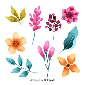 Fiori e foglie colorati dell'acquerello