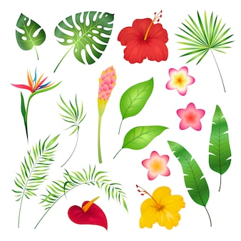 Fiori e foglie tropicali. orchidea tropicale caraibica hawai esotico, immagine di estate della giungla del fiore della foglia del fiore