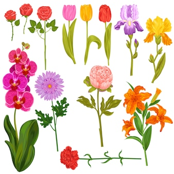 Fiori e invito floreale della cartolina d'auguri fiorito acquerello di vettore floreale per il compleanno di nozze