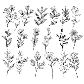 Fiori e rami botanici d'annata con stile disegnato a mano o di schizzo