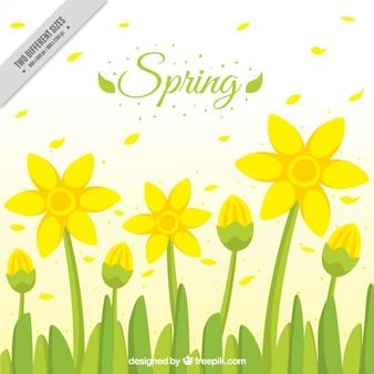 Fiori gialli primavera sfondo