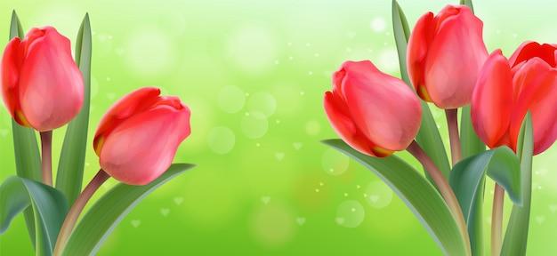 Fiori rosa del tulipano sul fondo verde del bokeh