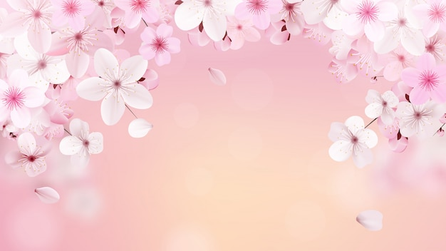 Fiori sboccianti rosa-chiaro di sakura
