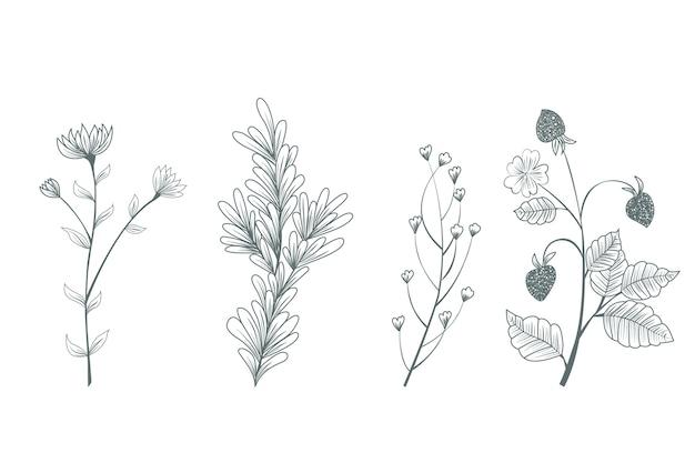 Fiori selvatici botanici disegnati a mano