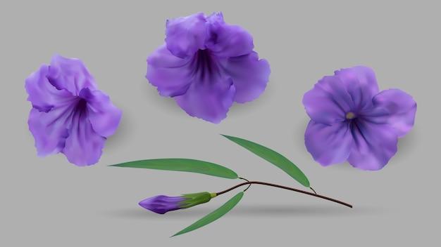 Fiori viola e foglie verdi della pianta del cracker