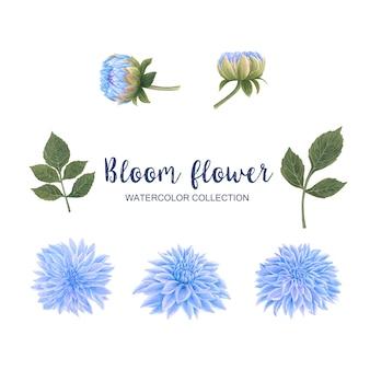Fiorisca l'elemento dell'acquerello del fiore su bianco per uso decorativo.