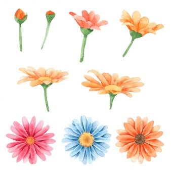Flower hand pained nella collezione dell'acquerello