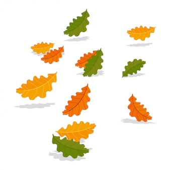Fogli di caduta della quercia di autunno isolati su bianco. illustrazione di cartone animato.