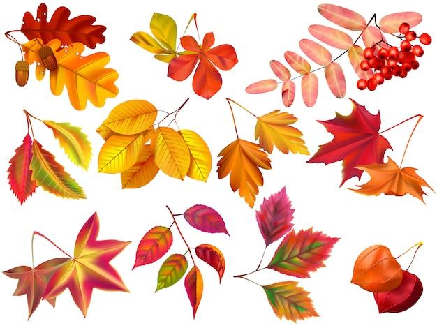 Foglia autunnale. foglie realistiche di acero, fogliame caduto e set autunnale di fogliame della natura