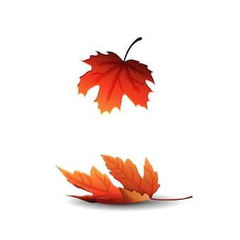 Foglia di acero autunno isolato