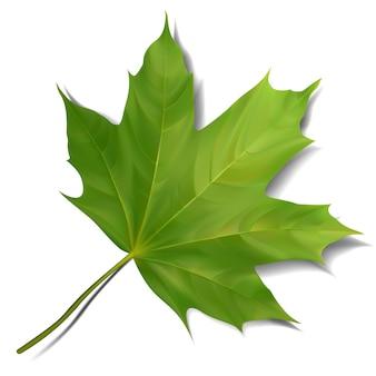 Foglia di acero verde su fondo bianco. illustrazione eps10