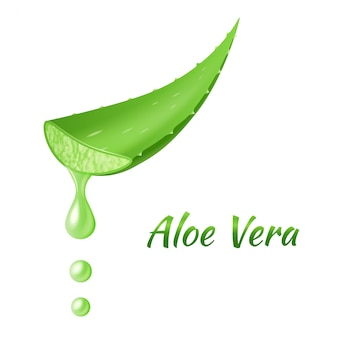 Foglia di aloe vera, pianta verde realistica, foglie o pezzi tagliati con succo di aloe gocciolante