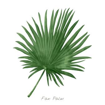 Foglia di palma del fan isolata su fondo bianco