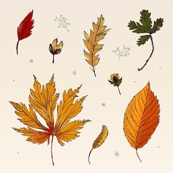 Foglie della foresta di autunno disegnate
