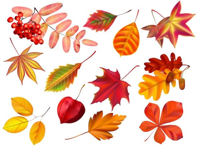Foglie di autunno di colore. insieme realistico foglie cadute, foglie secche colorate e foglie gialle