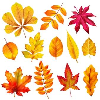 Foglie di autunno realistiche. fogliame autunnale in legno arancione di castagno e acero.
