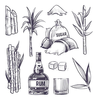 Foglie di canna disegnate a mano, steli di piante da zucchero, raccolta dell'azienda agricola della canna da zucchero, vetro e bottiglia di rum. il vettore ha impostato nello stile dell'incisione dell'annata