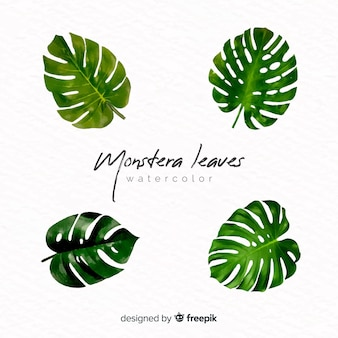 Foglie di monstera acquerello