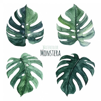 Foglie di monstera dell'acquerello