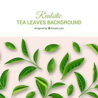Foglie di tè sfondo con piante
