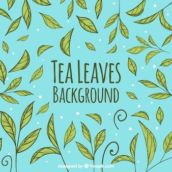 Foglie di tè sfondo con stile disegnato a mano