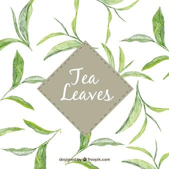 Foglie di tè sullo sfondo in stile acquerello