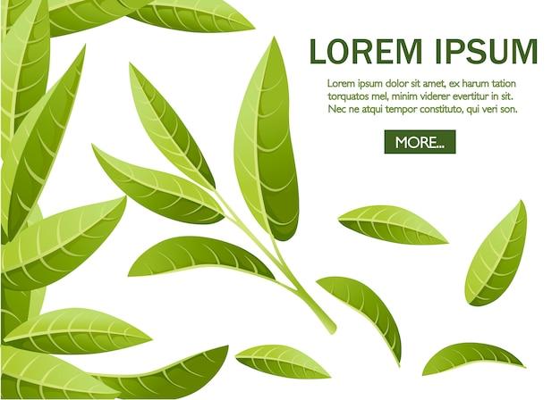 Foglie di tè verde fresche. tè verde per, pubblicità e packaging. illustrazione su sfondo bianco. posto per il testo. pagina del sito web e app per dispositivi mobili