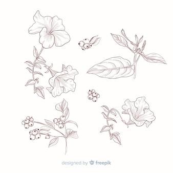 Foglie e fiori per la raccolta botanica